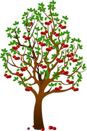 Cherry tree with berries and birds isolated on white background