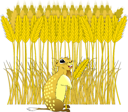 fields  grass: Cheerful gopher on a wheat field on a sunny day