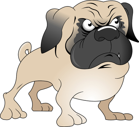 little angry pug with black ears, vector and illustration Ilustração