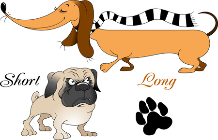 Very long dog on a walk with a small pug, vector