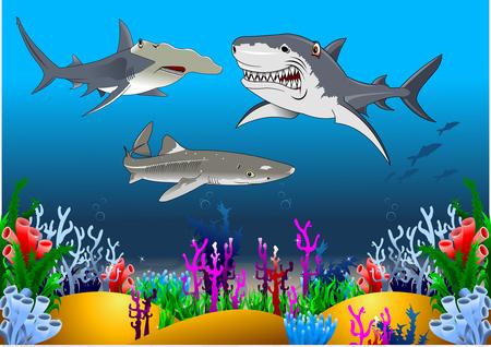 The white shark, hammerhead shark and tiger shark swim around a coral reef  イラスト・ベクター素材