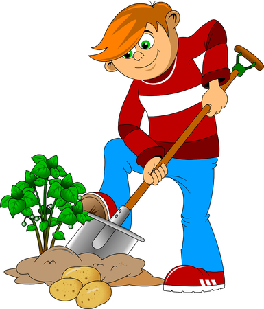 hardworking boy digs up potato tubers from the ground, vector