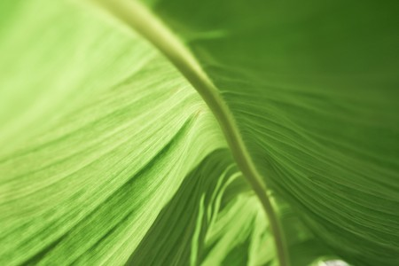 Look up under the Banana Leaf photo