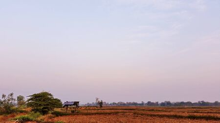 Natural view in the morning. Rice land which might be beginning to dry in the winter. After the farmer has finished harvesting at Chiang Rai, Thailand. Royalty free stock photograph.