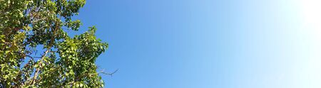 Natural view with horizontal shot images. Clear and deep color of blue sky on day time for background usage(panorama). Royalty free stock photograph.