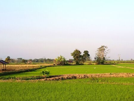 Riceland and sky natural space each day. Rice land which might be beginning growing in the winter. Farmer has start new season of grow rice at Northern of Thailand. Royalty free stock photograph.