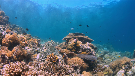 Colorful coral reef with plenty fish.
