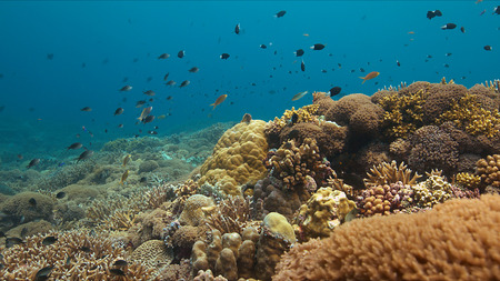 Colorful coral reef in Philippines with healthy hard corals and plenty fish.