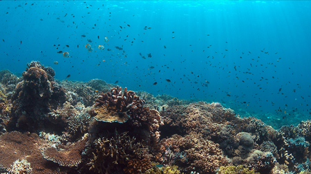 Colorful coral reef with healthy corals and plenty fish.