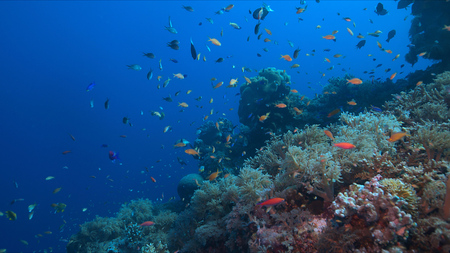 Colorful coral reef with healthy corals and plenty of small fish