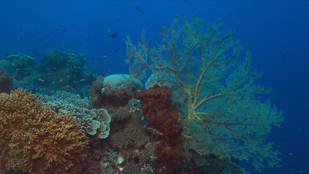 Colorful coral reef with big sea fan and plenty of fish