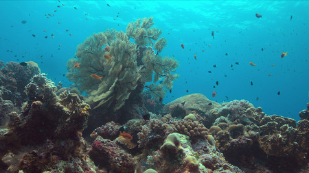 Colorful coral reef with big sea fan and plenty of fish.