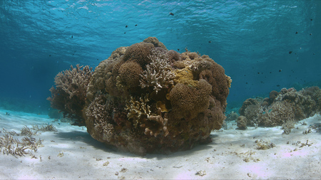 Shallow water of a coral reef with healthy hard corals. 스톡 콘텐츠
