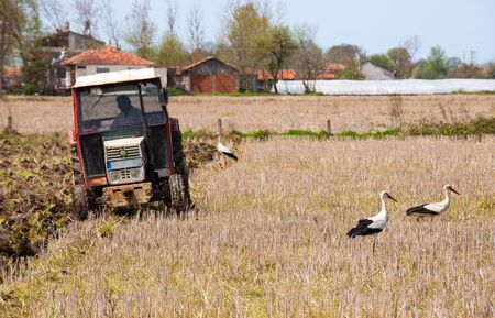 Tractor in the field with storks photo