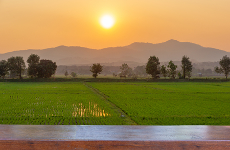 Empty wood table top on Landscape of Green rice field  with mountain on background in sunset 스톡 콘텐츠