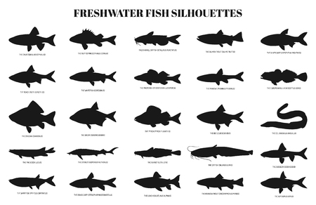 Zoetwatervissen silhouetten vector set. Verzameling van geïsoleerde pictogrammen op een witte achtergrond