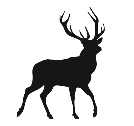 Isolated  illustration concept of a black silhouette of the buck on the white background