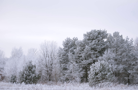 winter landscape with frozen trees Stock Photo