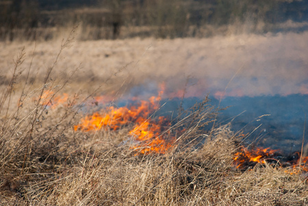 Burning field, old dry grass on fire at spring