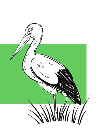 the White Stork, hand drawn vector illustration