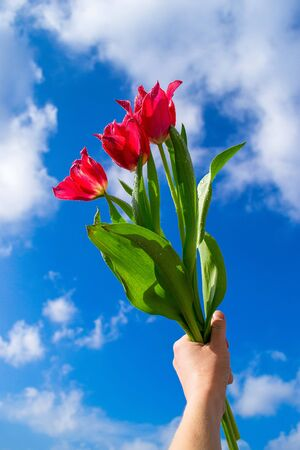 hand holding a bouquet of fresh tulips Banco de Imagens