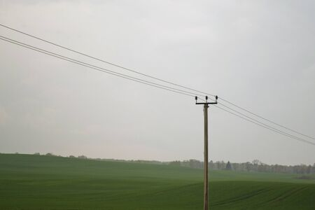 power line post in the fields in overcast conditions