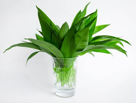 Ramson, bunch of wild garlic in a glass isolated on white background Foto de archivo