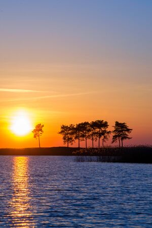Vivid sunset on a lake, blue and orange skyscape with a pines silhouettes Foto de archivo