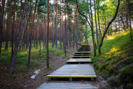 Wooden path to the Epha Dune on the Curonian Spit.