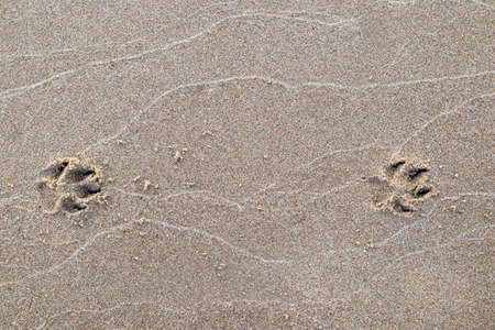 Dogs foot print in the sand Stock Photo
