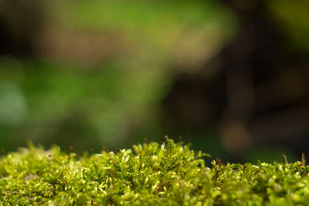 forest background with a green moss