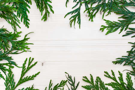 thuja twigs on a white wooden background Banque d'images