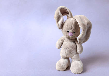 The soft toy bunny stays on a bright violet background