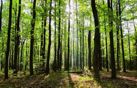 Wiosenny las Zdjęcie Seryjne