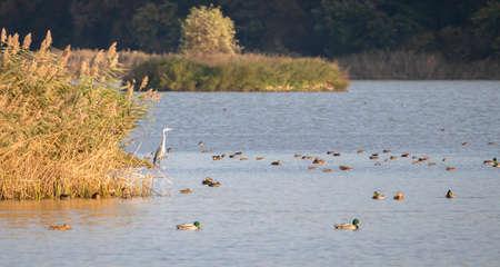 Wild birds in their natural habitat.