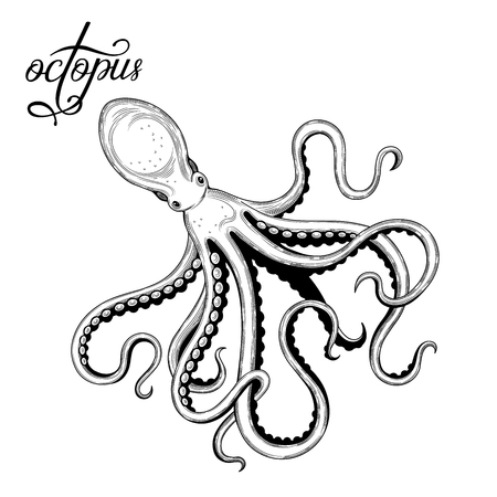 Octopus. Seafood. Vector illustration. Isolated image on white background. Vintage style. Vettoriali