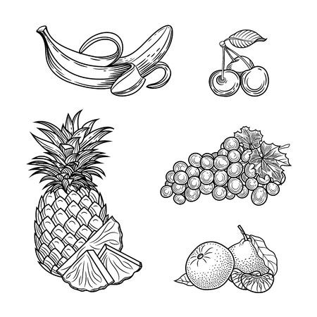 Botanical illustration. Fruit. Banana, cherry, grape, mandarin, pineapple. Vector graphics.