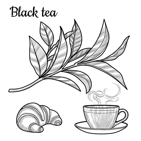 Black tea. A Cup of tea, a hot drink. A branch with leaves. Croissant. Illustration. The isolated image on a white background. Vintage style.