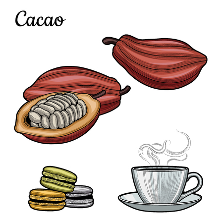 Cocoa. A Cup of hot cocoa-milk drink. Cocoa beans. Macaroon. Chocolate. Illustration. The isolated image on a white background. Vintage style. 일러스트