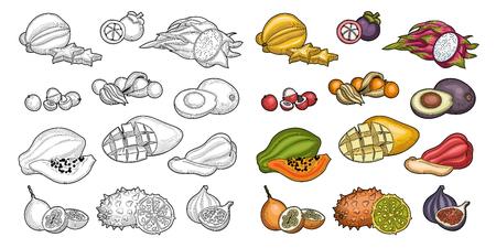 Des fruits. Fruit exotique. Carambole, litchi, grenadille, cerise d'hiver, figues, pomme de java, mangoustan, fruit du dragon, avocat, papaye, mangue, kiwano. Illustration. Isolé sur fond blanc.