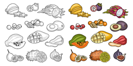 Fruits. Tropical fruit. Carambola, litchi, granadilla, winter cherry, figs, java apple, mangosteen, dragon fruit, avocado, papaya, mango, kiwano fruits. Illustration. Isolated on white background.