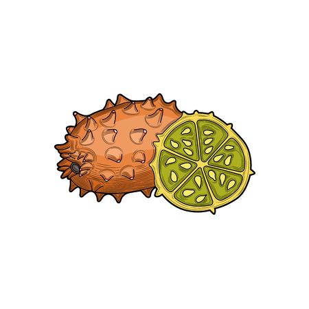 Kiwano Fruits. Half a Kiwano Fruits. Fruit crop. Tropical fruit. Illustration. Isolated on white background. Illustration