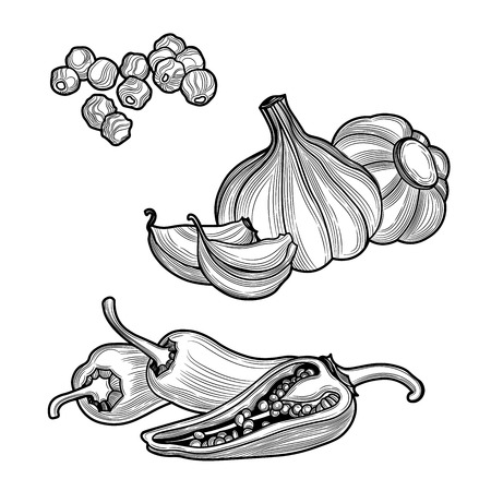 Spices. Black pepper, chili pepper, garlic. Isolated on white background. Vector black vintage engraved illustration.