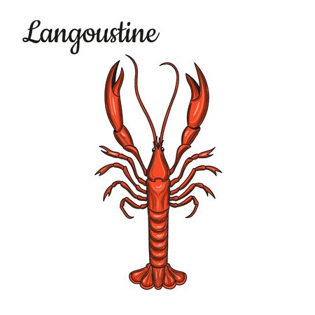 Langoustine. Crustaceans. Seafood. Vector illustration. Isolated image on white background. Vintage style. Stock Vector - 112039586