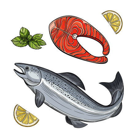 Piece of Salmon fish. Seafood. Vector illustration. Isolated images on white background. Vintage style. 版權商用圖片 - 112039589