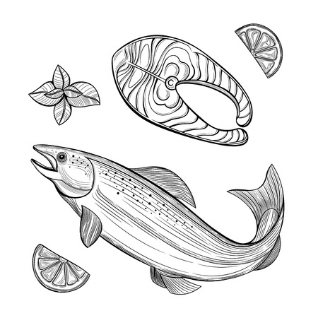 Piece of salmon. Salmon. Seafood. Lemon, mint. Vector illustration. Isolated images on white background. Vintage style.