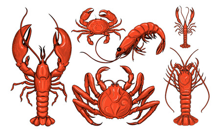 Crab, shrimp, lobster, langoustine, spiny lobster. Seafood. Vector illustration. Isolated image on white background. Vintage style.