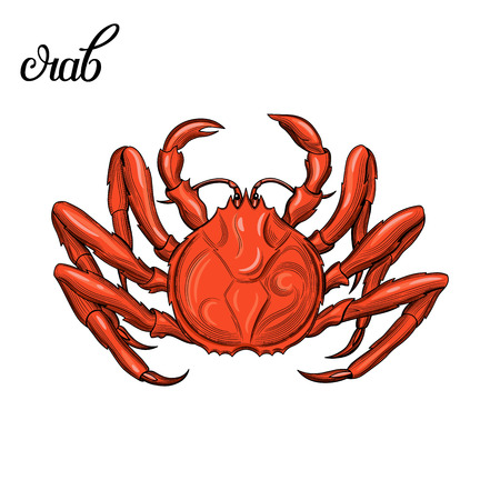 Crab. Seafood. Vector illustration. Isolated image on white background. Vintage style.