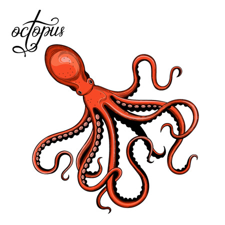 Octopus. Seafood. Vector illustration. Isolated image on white background. Vintage style. Çizim