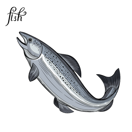 Fish. Seafood. Vector illustration. Isolated image on white background. Vintage style. Çizim